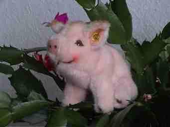 Piggy, das Schwein
